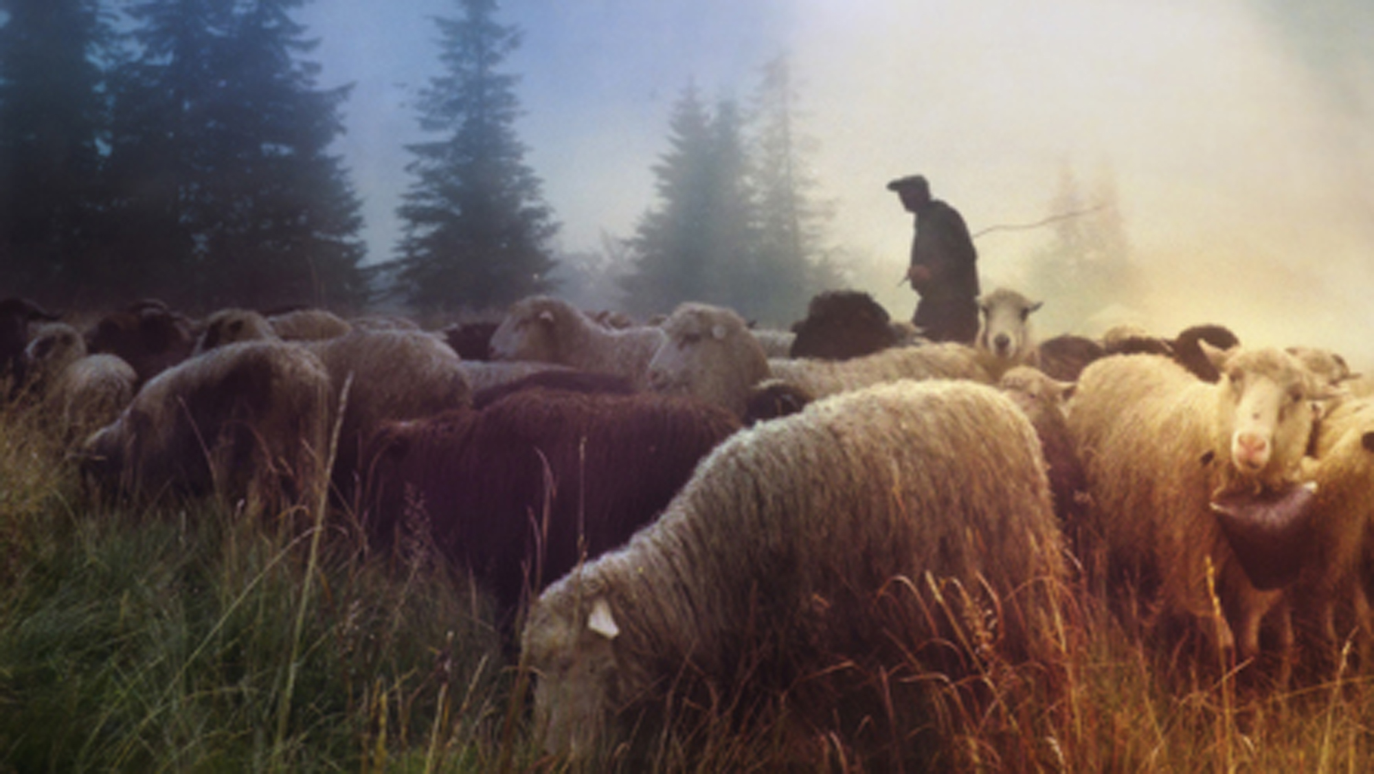 'Feed my sheep': A shepherd's call to war
